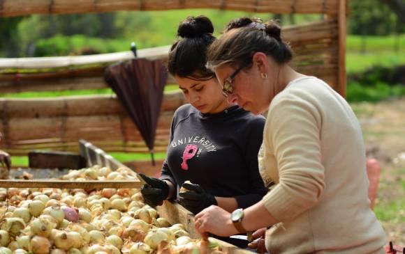 app para cultivadores, app de emprendimientos, emprendimiento boyacense, aplicación colombiana