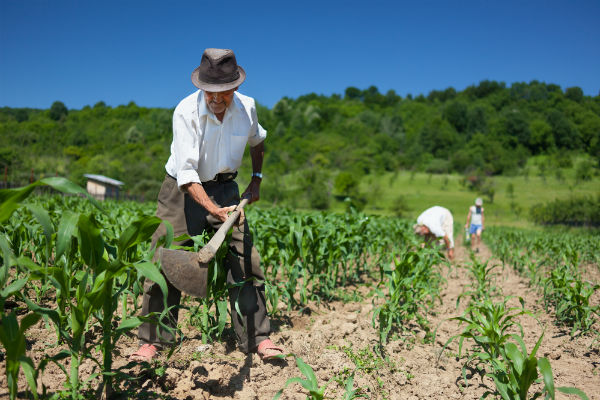campesino-trabajo-campo
