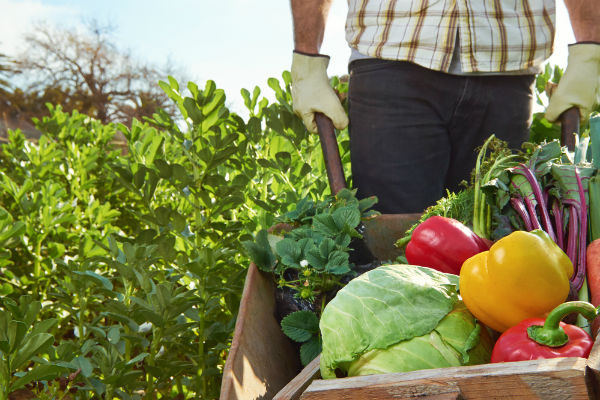 verduras-campesinos-colombia