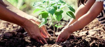Ayúdanos a hacer una nueva entrega de amor al planeta. ¡Más arboles regalándonos oxigeno!